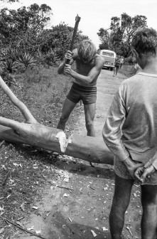 chopping trees